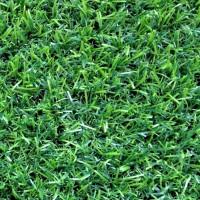 Искусственная трава Эконом Grass