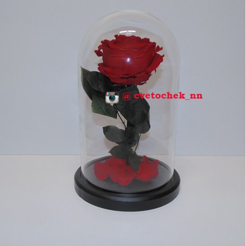 Красная роза в колбе королевская