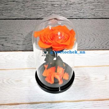 Оранжевая роза в колбе королевская