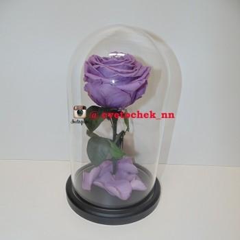 Сиреневая роза в колбе королевская