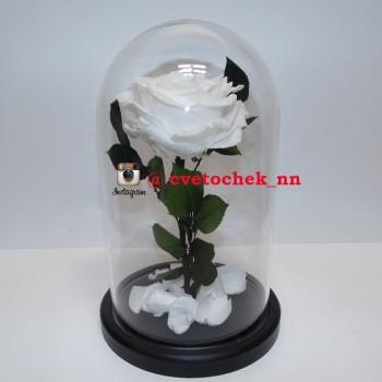 Белая роза в колбе королевская